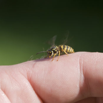 """a wasp sitting on the fingers,"""