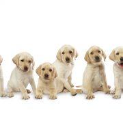 soo-cute-3-dogs