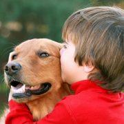 dog-autism