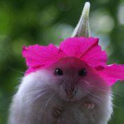 smile,cuteflowerhatmouse,mousie,mouseflowerhat,cute,flower-1a0cdf367c91e56e35c671f79ceba0c3_h