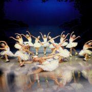 Swan_Lake_03