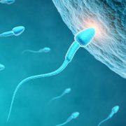 epistimones-dimiourgisan-anthrwpina-spermatozwaria.w_l