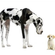 animals-friendship-big-and-small-real-182250