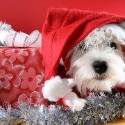 Santa-Claus-dog