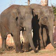 elefantes attiko parko
