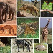 Zoo-Animal-Composite