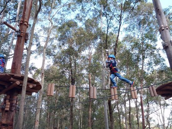 treetop-adventure-park