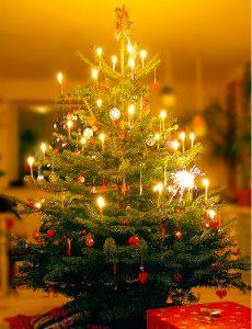 christmas-juletrae