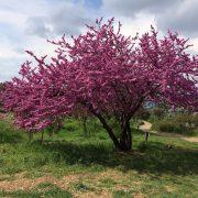 Ymittos-Spring