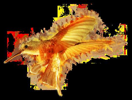 fire_colibri_by_cantilux