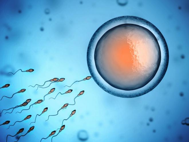 ανδρικού σπέρματος