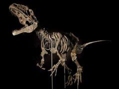 Skeletow-deinosayrou-238x178